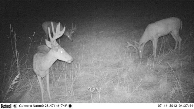 Entfernungsmesser Jagd Test 2014 : Testbericht bushnell trophy hd wildkamera jäger werden