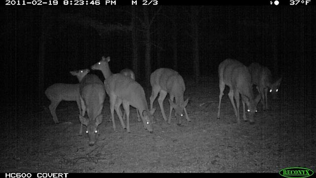 Entfernungsmesser Jagd Test 2014 : Reconyx hc wildkamera test review jäger werden