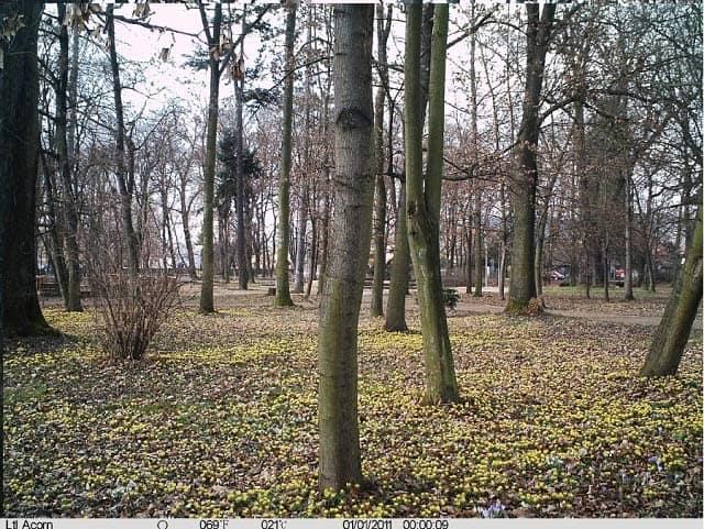 wildkamera fotofalle bild 5310A MC MM Tag 1