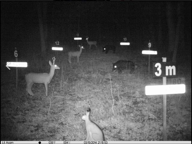 wildkamera fotofalle bild 5310A MC MM nacht 1
