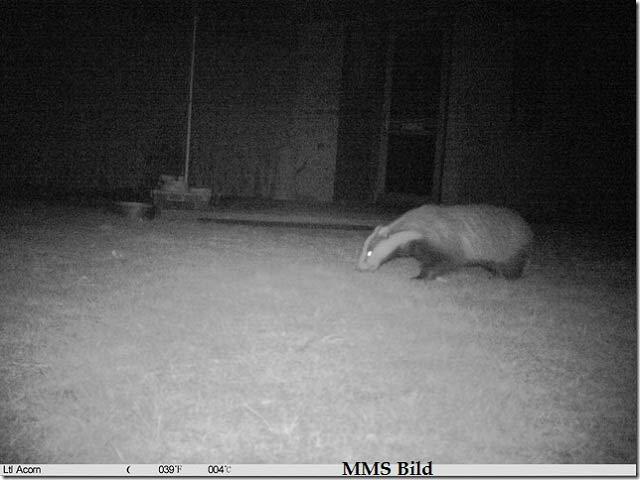wildkamera fotofalle bild 5310A MC MM nacht mms 1