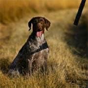 Bedeutung und Aufgabe des Jagdhundes beim Jagen