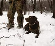 Jagd im Feld - Jagdhund vor dem Schuss