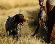 Jagen im Wald - Jagdhund nach dem Schuss