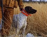 Die anerkannten Jagdgebrauchshunde