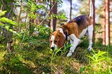 Unterordnung-Leinenfuehrigkeit-und-Sportdisziplinen-–-Hundeausbildungsplan